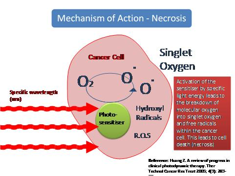 Porphyrin And Phthalocyanine Photosensitizers As Pdt Agents A New Modality For The Treatment Of Mela in addition Hemestruct besides Alpha 1 Antitrypsin Deficiency A Missed Opportunity In Copd moreover Cancer Active Page Link together with Article. on oxygen therapy