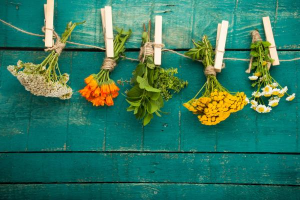 20 Herbs That Can Fight Cancer