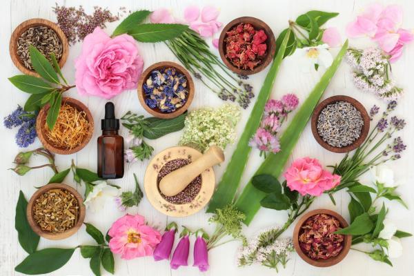 Graviola, Soursop, Annona Muricata and cancer | CANCERactive