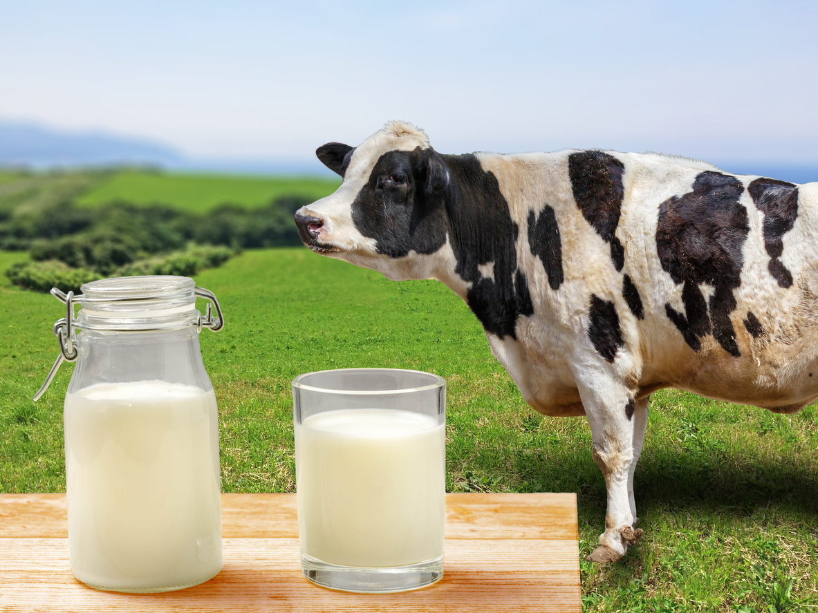 Dairy products increase prostate cancer progression