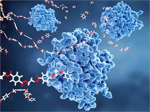 PNC-27  the peptide that kills cancer cells?