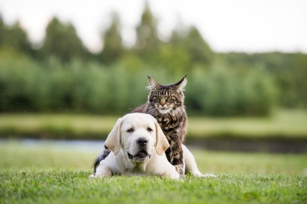 The staggering statistics on pet cancer  cats and dogs