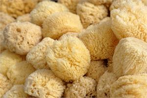 Sea sponge contains anti-cancer agent