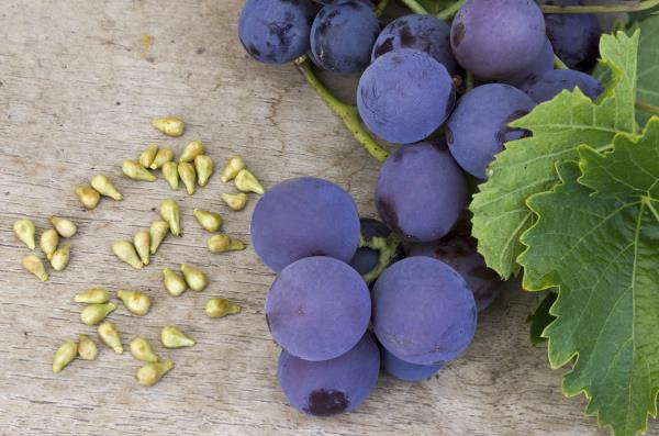 Grape seed extract, OPCs and cancer